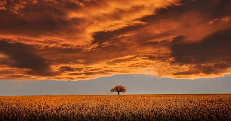 A lone peaceful tree in a field with heavy clouds.